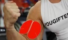 肱二头肌锻炼方法―杠铃臂弯举