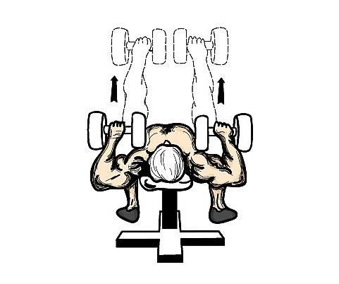 哑铃平卧锻炼胸肌的最佳动作