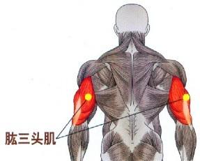 亚博app下载安装_yb亚博体育网页版登录_亚博体育官网下载ios对三角肌前部、肱三头肌、前锯肌和胸小肌有很好的锻炼作用