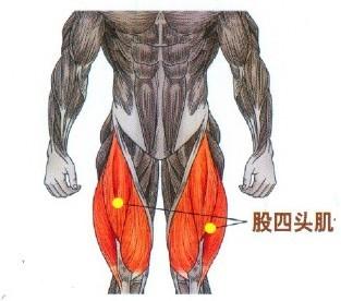 yb亚博体育网页版登录深蹲主要强化股四头肌