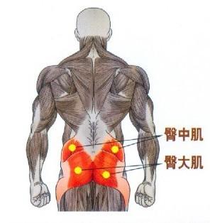 哑铃深蹲对臀大肌有很好的锻炼作用