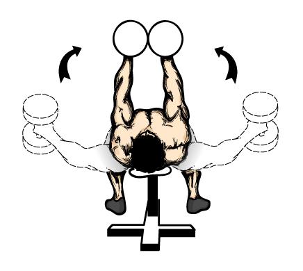 平卧哑铃飞鸟是单独锻炼胸大肌的经典动作