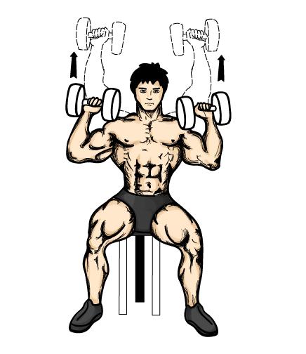 坐姿哑铃推举是锻炼肩部的基本动作。