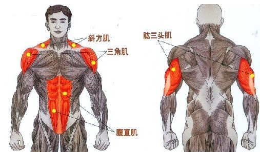 坐姿哑铃推举对三角肌尤其三角肌中部的锻炼最明显。