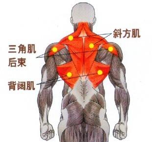 优乐国际娱乐_U乐国际娱乐官网|www.youle88.com对背阔肌的中上部、斜方肌的中束也有明显的刺激作用