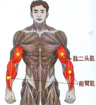 yb亚博体育网页版登录弯举锻炼肱二头肌