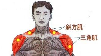 如何用哑铃锻炼肩部肌肉?