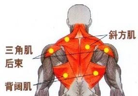 如何用哑铃锻炼背部肌肉?