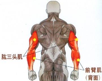 哑铃颈后臂屈伸锻炼肱三头肌