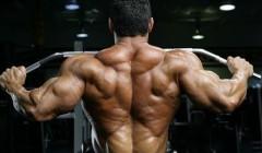 更系统认识背部肌肉锻炼方法
