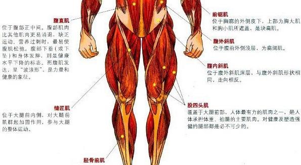 腿部肌肉的训练