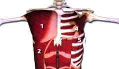 史上最全肌肉部位图解