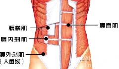 细腰的关键在于腹横肌的锻炼