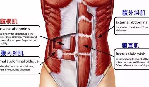 腹外斜肌锻炼方法——介绍腹外斜肌训